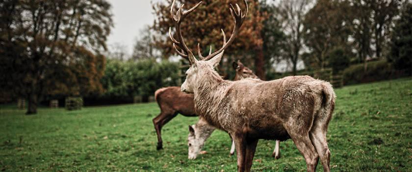 Curtis Pitts deer management