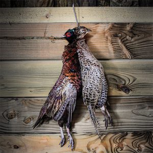 whole wild pheasant in the feather