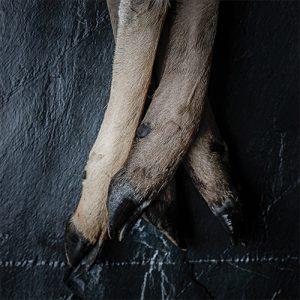 venison feet