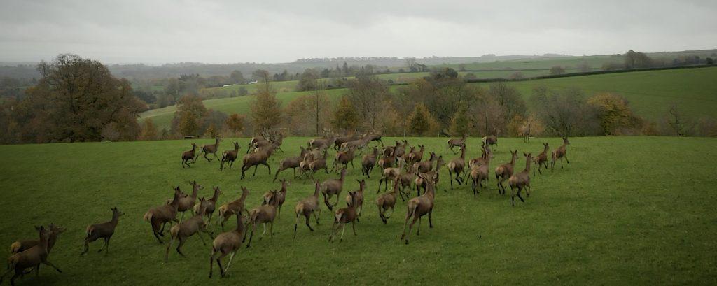 wild deer drone