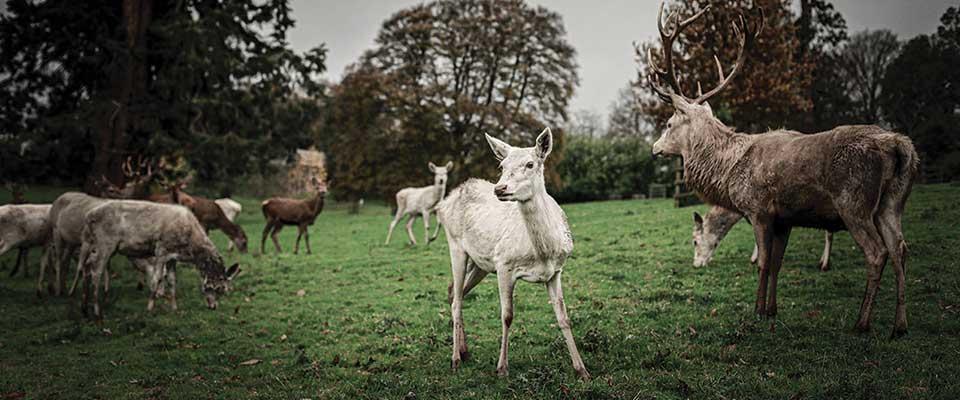 Wild Deer & Parkland Management