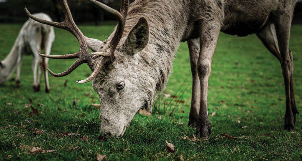 Parkland and Wild Deer Management